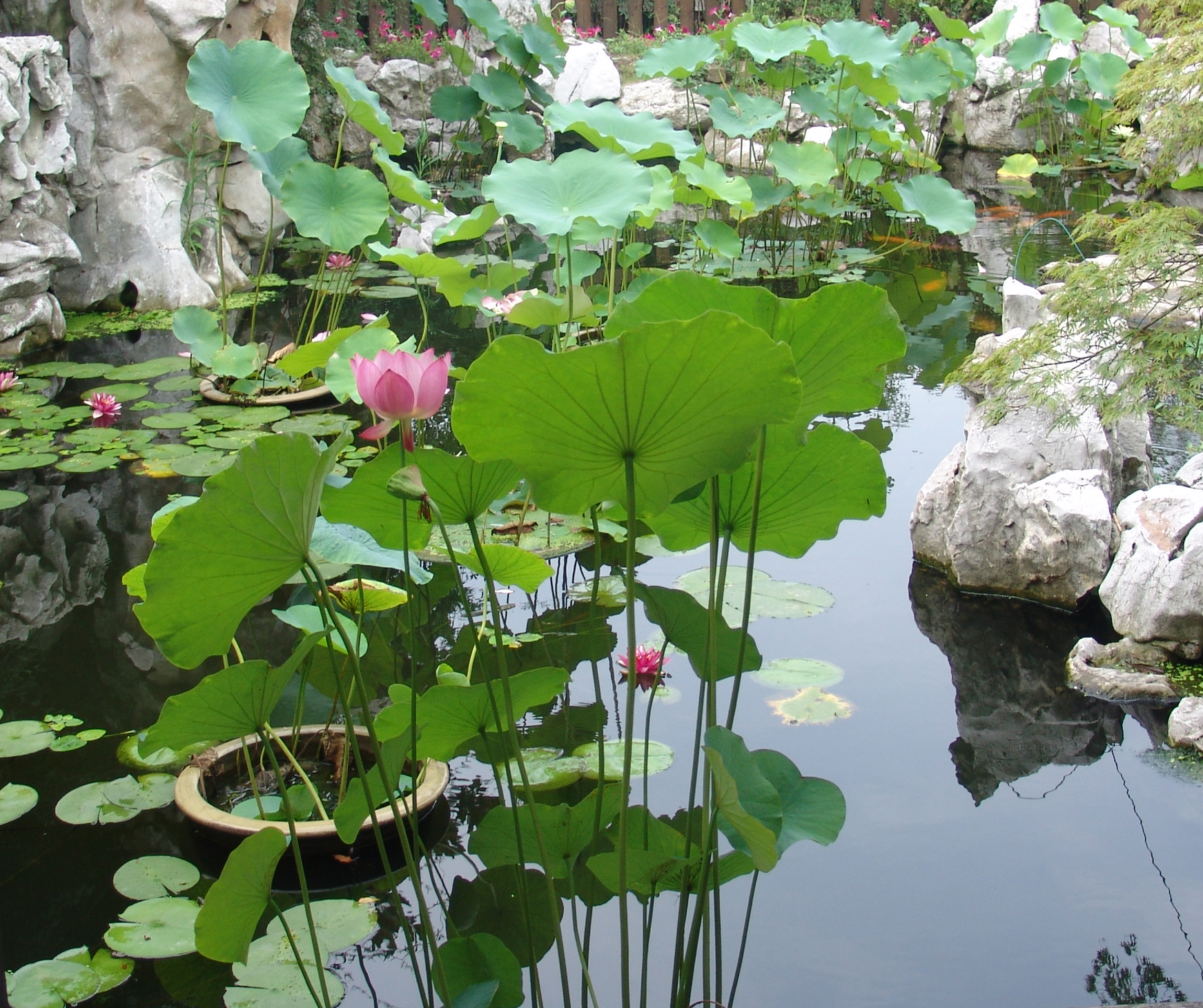 假山花园鱼池